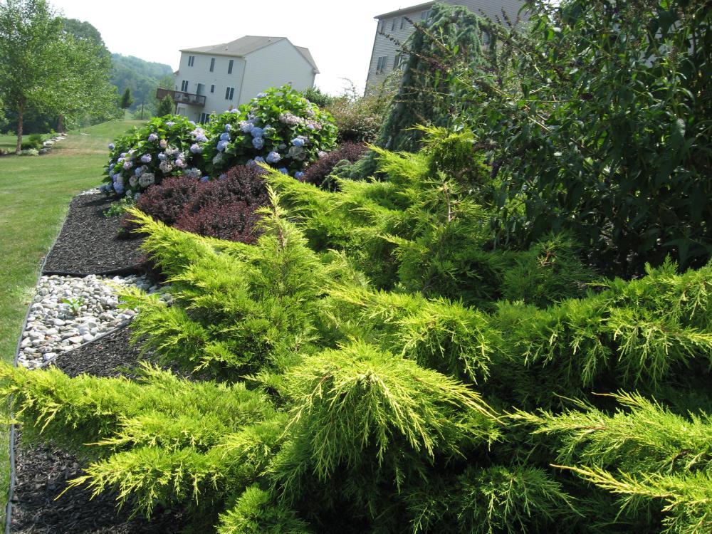 Welcome for Hillside landscaping