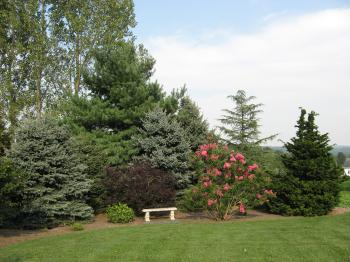 Maturing Evergreen Plantings
