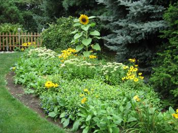 Perennials, Annuals, and Evergreens