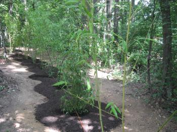 Young Bamboo Grove